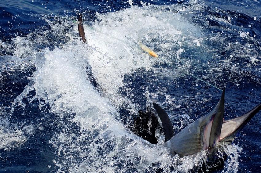 Акапулько рыбалка