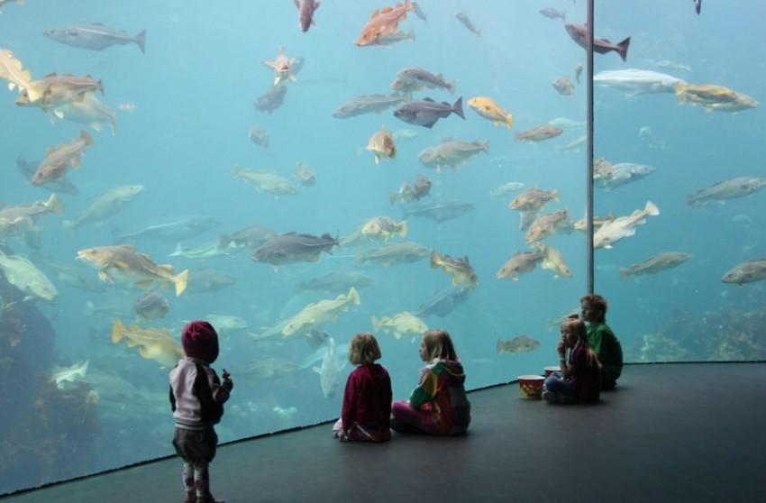 Олесунн атлантический морской парк
